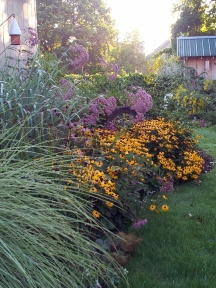 "Ornamental grasses 'Morning Light' and 'Dallas Blues' all grown up and set off by Black-eyed Susans and Joe-Pye, steal the show in the Fall of 2012. This garden bed is a small ""corridor"" offering safe passage and a connection to the back garden. Far more enticing to wildlife than bare, open lawn."