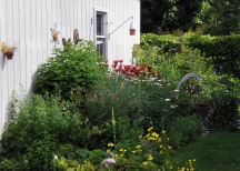 Summer of 2010. A driftwood sculpture reminiscent of a Blue Heron stands among the now large drifts of perennials. Swamp milkweed hosts Monarchs, Oenothera Evening Primrose (yellow flowers blooming in the foreground) attracts bees and birds.