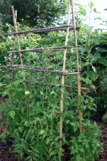The tiki torch tomato cage assembled with reclaimed, cut down tiki torches.