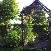The arbor supports Trumpet Vine in 2012. I experimented with several annual flowering vines on the arbor –Exotic Love Vine, Morning Glory – but found myself wishing for blooms earlier in the season. Hummingbirds frequent the Potager and love the sprinkler.