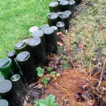 In 2012 I play with hardscape in the Potager. Here, a wine bottle border. Now I like my wine but I had a lot of help collecting these bottles! Even better, drinking the wine together with friends and keeping the bottles.