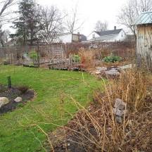 By the end of 2012 the Potager is now seamlessly linked to the Woodland Edge and also to a new section, just started, along the other side of a new fence. A few perennials tucked in here and there blend the Potager into the rest of the garden.
