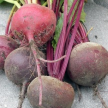 Beets in a rainbow of colors.