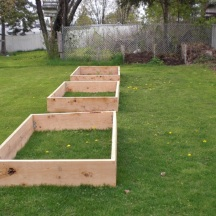The raised beds as seen from the shed. Compost bins – or piles really (in the far background), flank the left side of the Potager. The base fill for these beds was the aged grass or sod, dug up from the making of the Bird & Butterfly Garden the previous year.