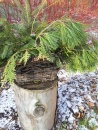 Another log pedestal in the garden topped with basketful of greenery strategically placed in front of Red Osier Dogwood.