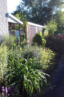 Summer 2011. The perennials are filling in. Giant Coneflower blooms wave in the breeze.