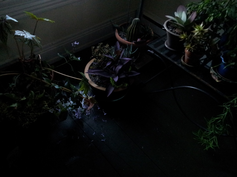 Succulents in another corner.