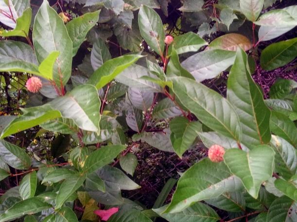 leavesfallseed
