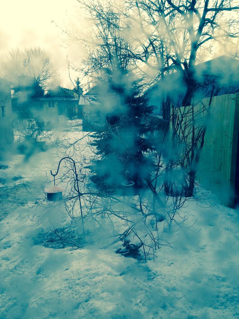 snowbeforetheforest