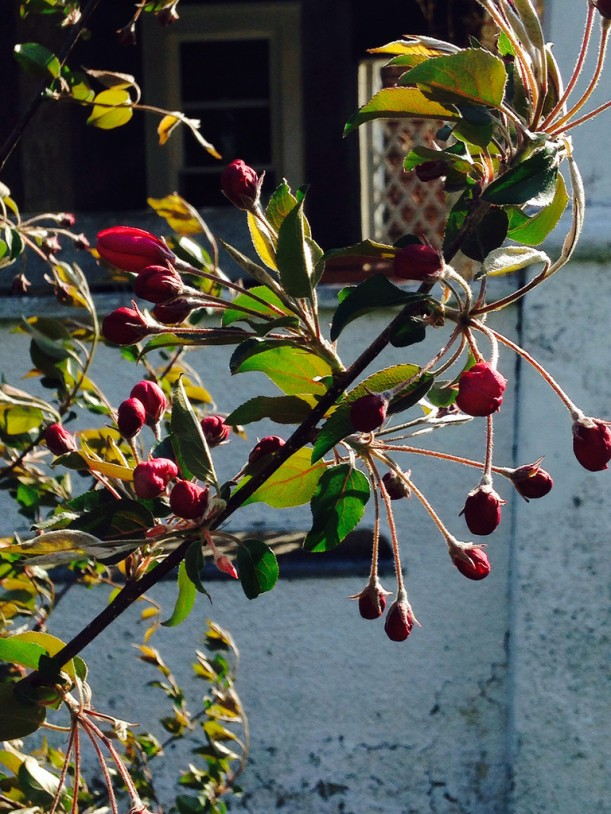 cherrycrabmay2014