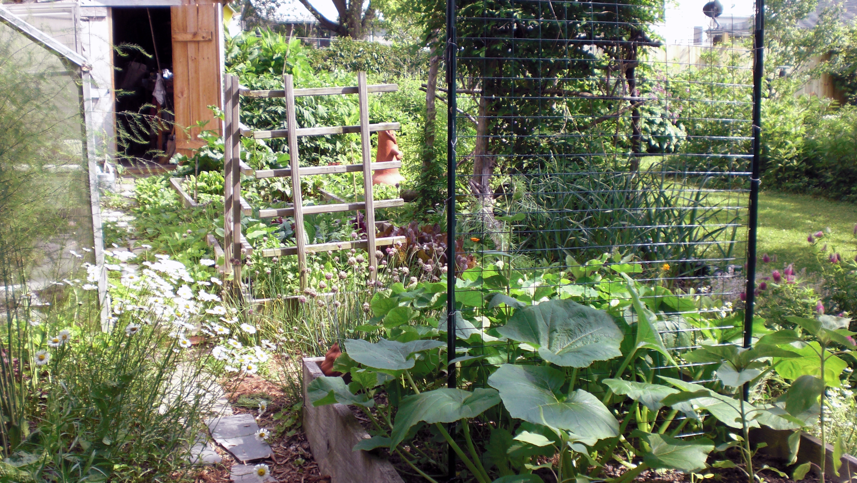 what s growing the violet fern. Black Bedroom Furniture Sets. Home Design Ideas